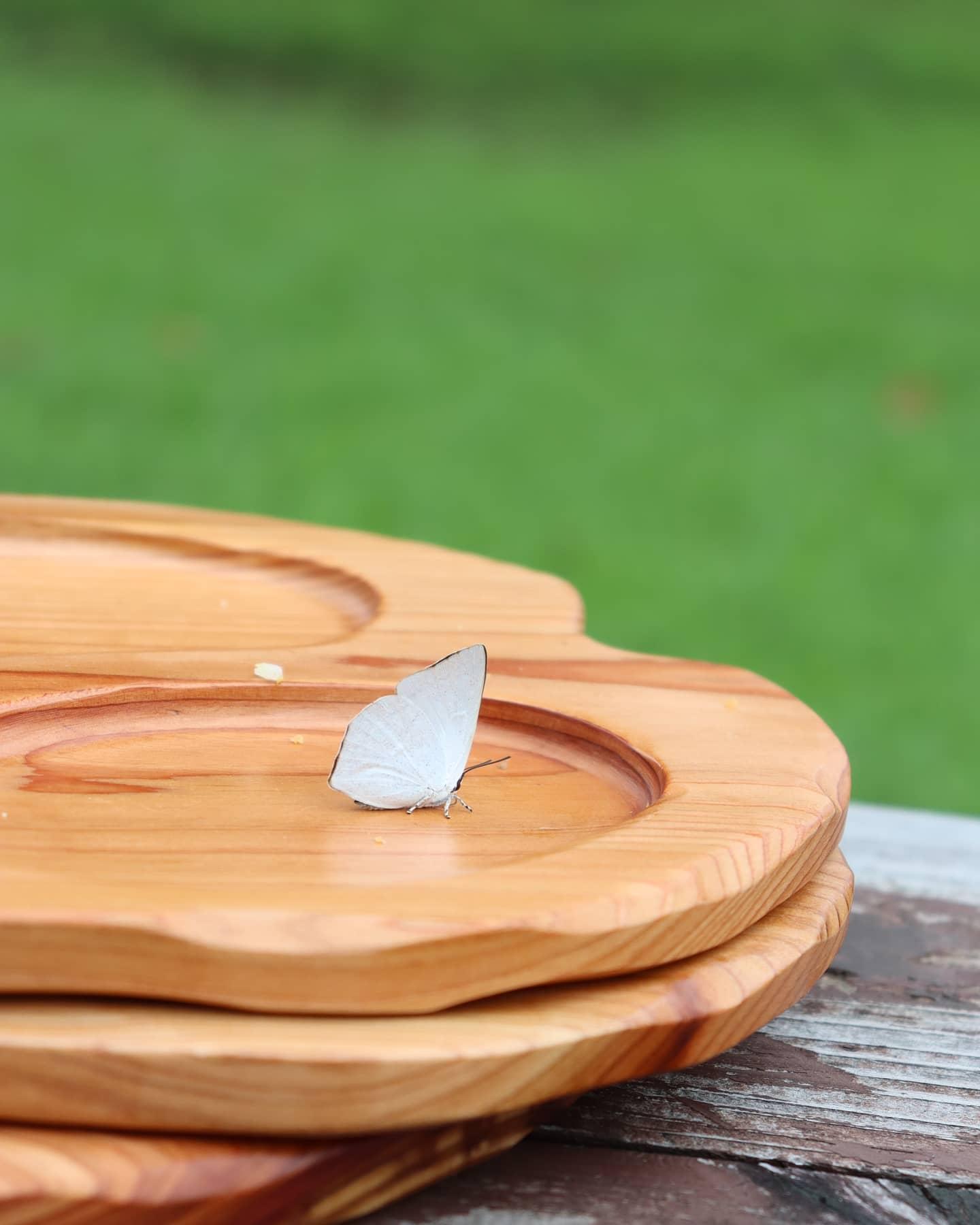【ピクニック】木頭杉のプレート🦋